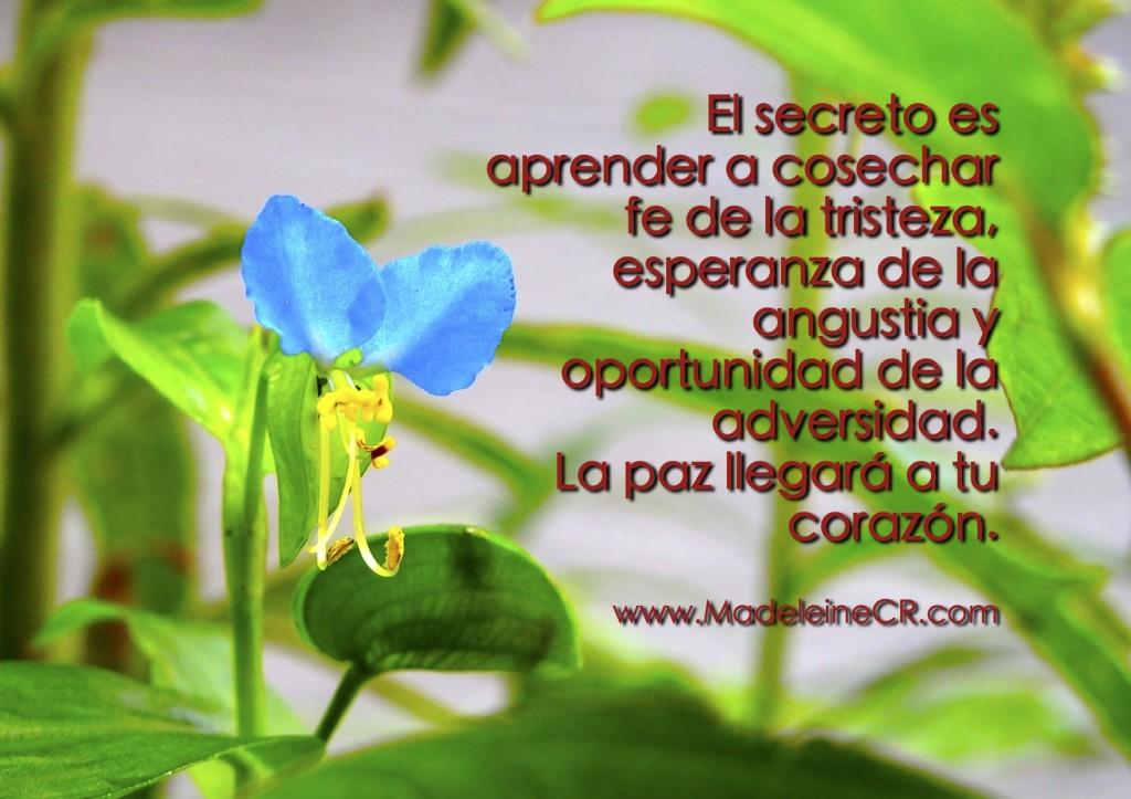 El secreto es aprender a cosechar fe de la tristeza