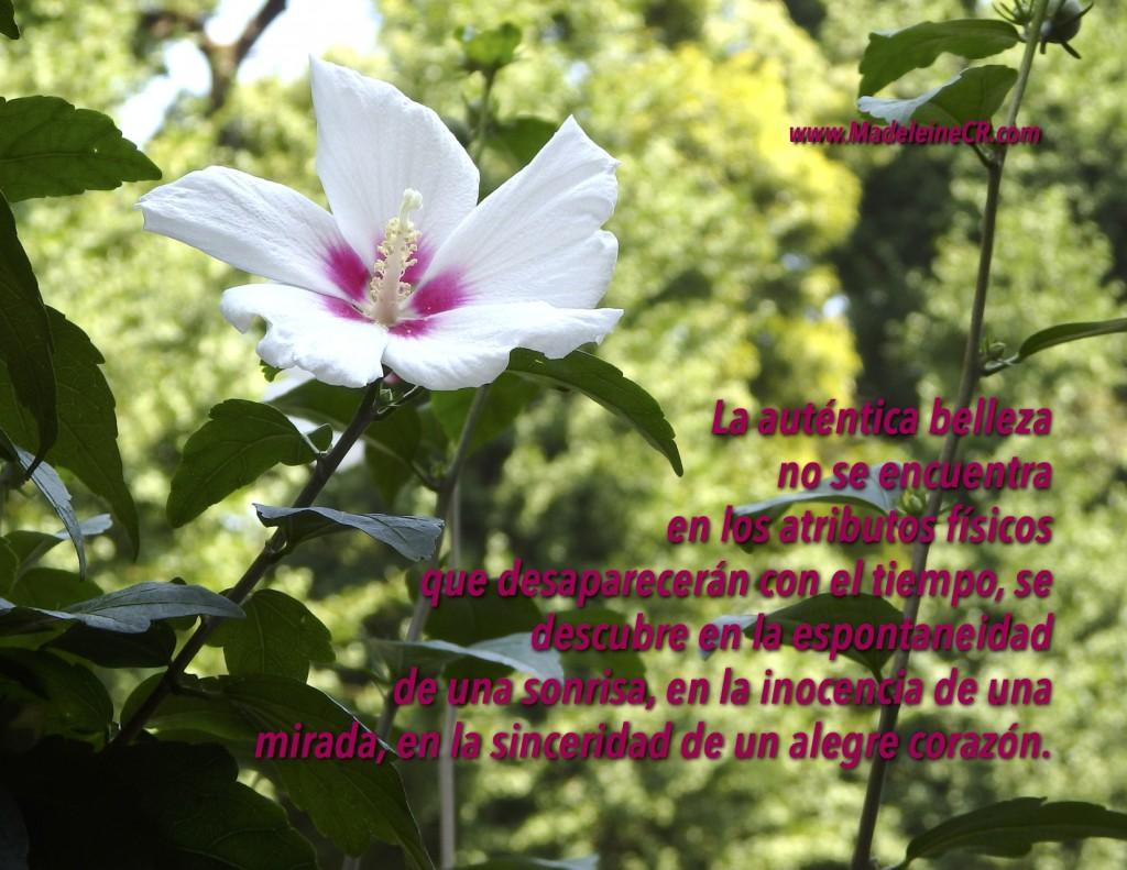 La auténtica belleza  no se encuentra en los atributos físicos que desaparecerán con el tiempo