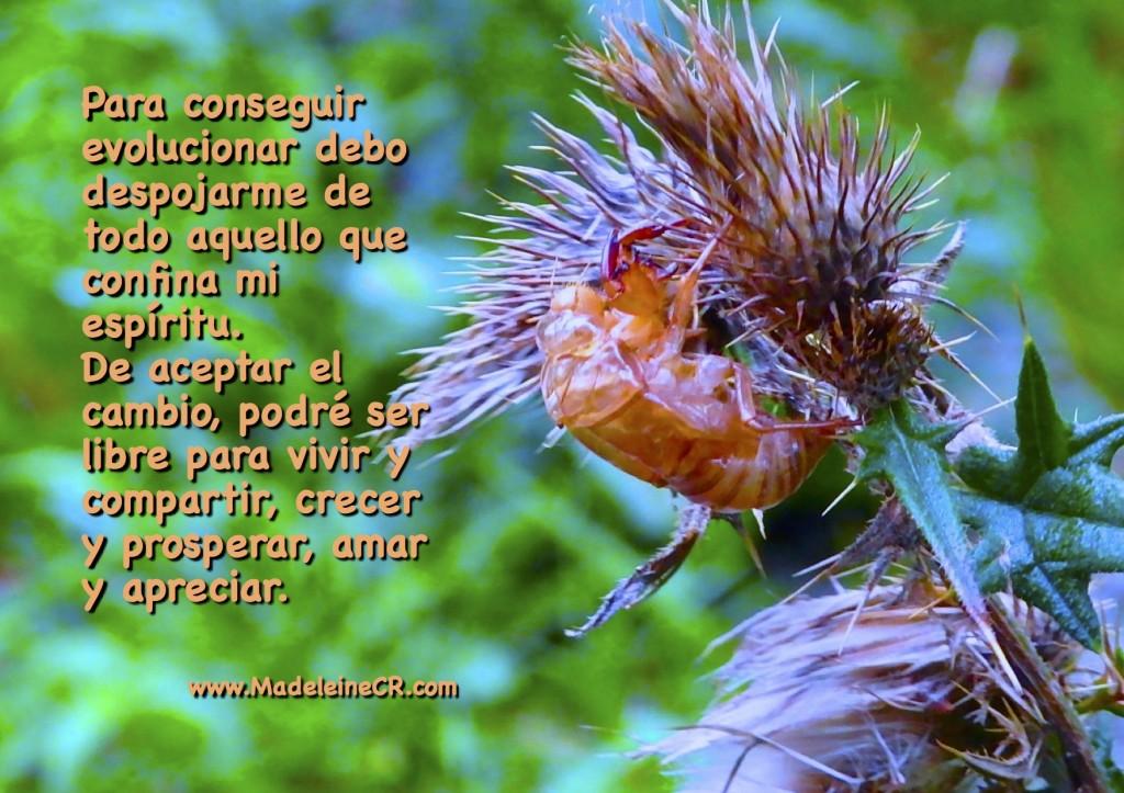 Para conseguir evolucionar debo despojarme de todo aquello que confina mi espíritu